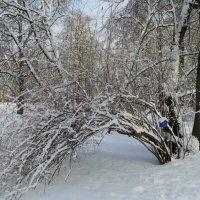 В зимнем парке. :: Валентина Жукова