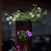 Цветы зимой :: Александр Деревяшкин