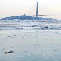 мост и тюлень :: Ingwar