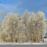 В зимнем городе :: Ольга