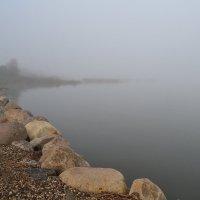 Млечной мягкостью манит туман... :: Елена Майорова