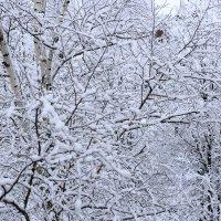 Снежное утро :: Елена Миронова