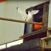 Портрет знакомой чайки... :: Кай-8 (Ярослав) Забелин