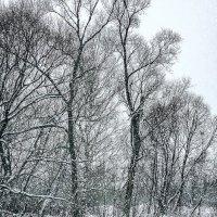 Зимы ждала, ждала природа. Снег выпал только в январе. :: Людмила Финкель