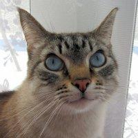 Кот,который очень хочет сбежать... :: Галина Полина