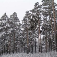 Сибирский морозец :: Михаил Андреев