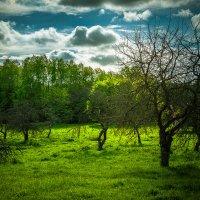 Старый сад :: Игорь Вишняков