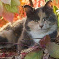Кошка в винограде :: Марина Савчиц