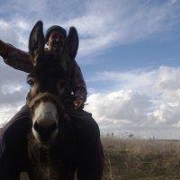пастух счастливым :: İsmail Arda arda