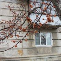 Весна совсем не за горами :: Галина Дашевская