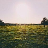 Солнечная даль :: Dasha Ald