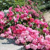 Розы Крыма :: Nyusha