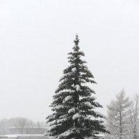Зимние Деньки :: Олег Савин