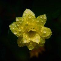 Цветок с ноготок :: Николай П