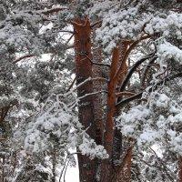 Леса прощаются с зимой... :: Лесо-Вед (Баранов)