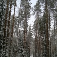 Где-то между Зеленогорском и Комарово :: tipchik