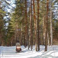 Встреча в лесу. :: Мила Бовкун