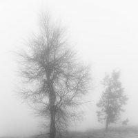 В тумане на Демерджи :: Антон Фатыхов