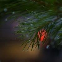Зимняя капель :: Майя Бреннер