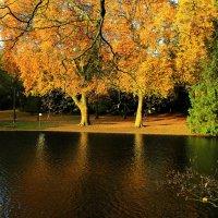 В осеннем парке гуляя :: Alexander Andronik