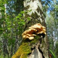 В неведомом лесу. :: nadyasilyuk Вознюк