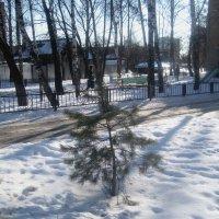Последние дни февраля.До свидания, зима! :: Елена Семигина