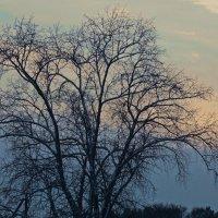 Непонятное природное явление :: Весна