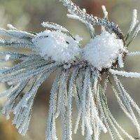 С последним днем зимы! :: Swetlana V