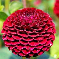 Запах – душа цветка... :: Mari Kush