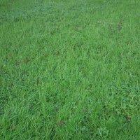 Просто трава зимой :: Natalia Harries