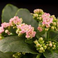 Цветы :: Александр ----------------