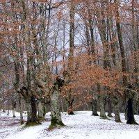 Зимний лес. :: Olga Grushko