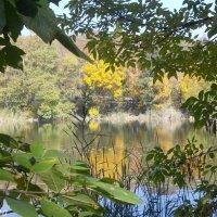 Озеро в Мухиной балке :: Нина Бутко