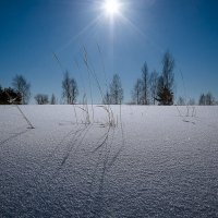 Тени на снегу :: Алексей Сапожков