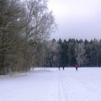 Лыжная прогулка :: Ольга П