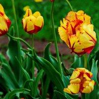 С первым днем весны !!! :: Маргарита ( Марта ) Дрожжина