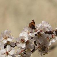С весной!!! :: Наталья (D.Nat@lia) Джикидзе (Берёзина)