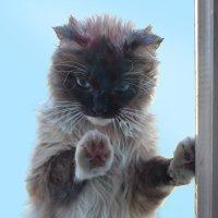 День Кошек без меня?! Откройте!!! :: Елена Миронова