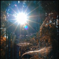 в лесу :: Анатолий Фирстов