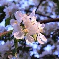 Просто буду ждать весны грядущей :: Татьяна Ломтева