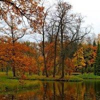 Осень, радуя прохладой... :: Mari Kush