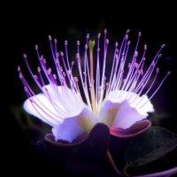 цветок пустыни :: Юрий Захаров
