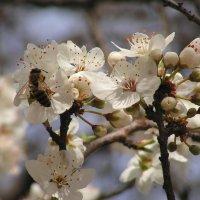 Первый день весны в Севастополе :: Елена Даньшина