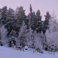 Зимняя палитра :: Татьяна Соловьева