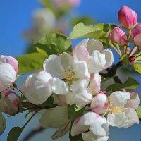 Весна идет... :: И.В.К. ))