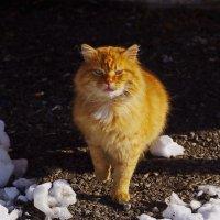 С днём кошек и котов. :: Ирина Нафаня