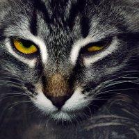 Сегодня день котиков,говорите.... :: максим веселов