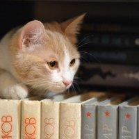 Кошка-книголюб :: cfysx