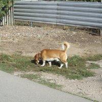 из жизни собак :: tgtyjdrf