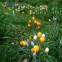 Весною мир – красочный. Весною он – сказочный. :: Galina Dzubina